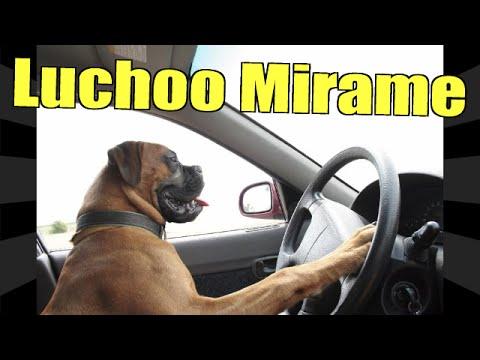 Mira Estos Perros Graciosos Haciendo Cosas Increíbles Que Dan Muchísima Risa