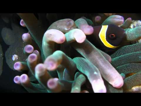 Seven Gallon Seas - An Underwater Look At Life On The Minature Reef (HD)