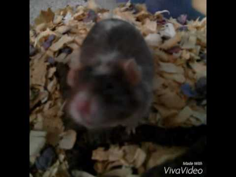 DIY  Paper Bedding for mice and hamsters