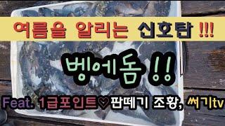 ●벵에돔타작● Feat. 1급포인트 판떼기조황 벵에돔 …