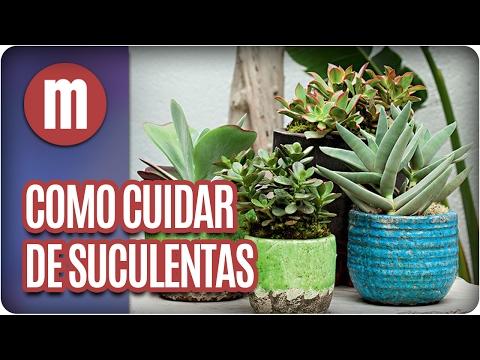 Como cuidar de plantas suculentas - Mulheres (06/02/17)