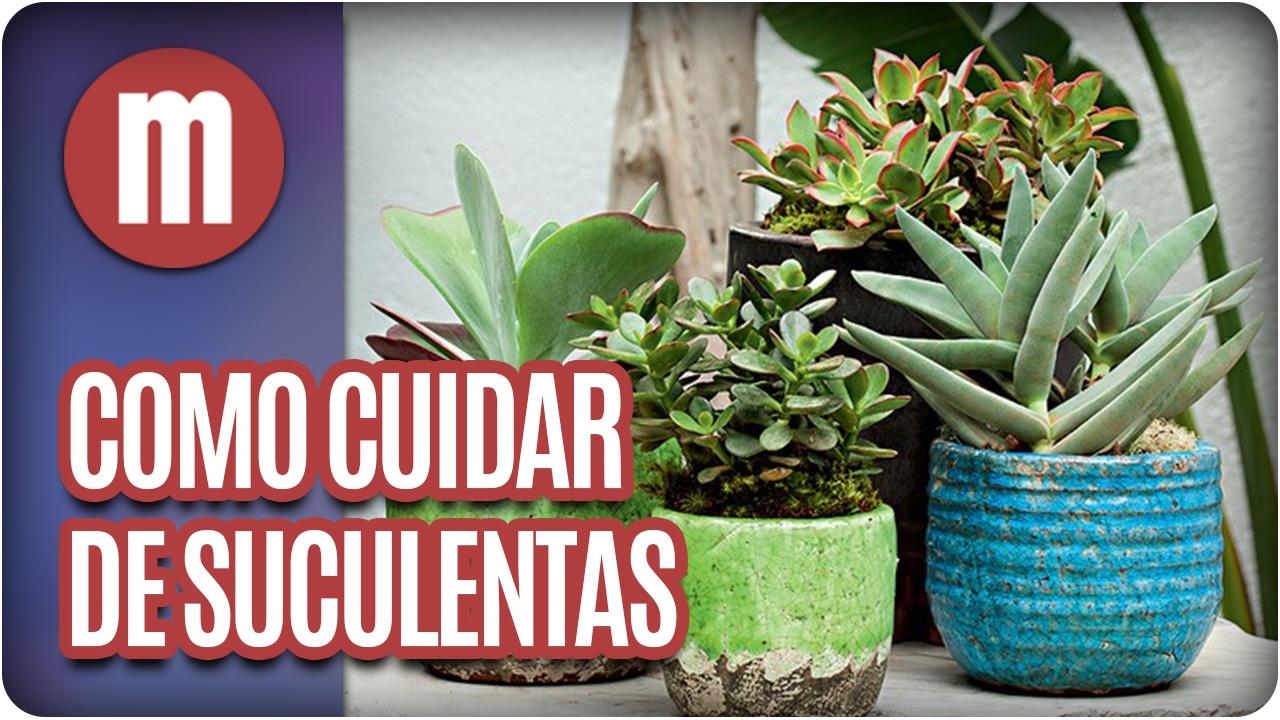 Como cuidar de plantas suculentas mulheres 06 02 17 for Como cuidar las plantas ornamentales