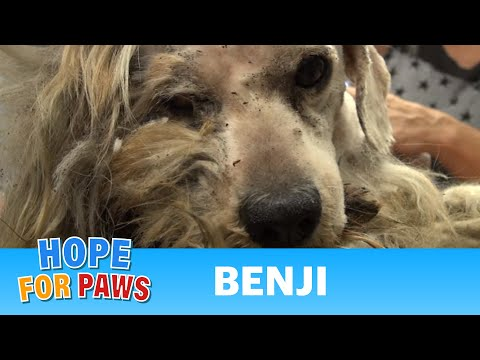 Hope For Paws: Benji was homeless his whole life... WATCH what happens next!  Please share.