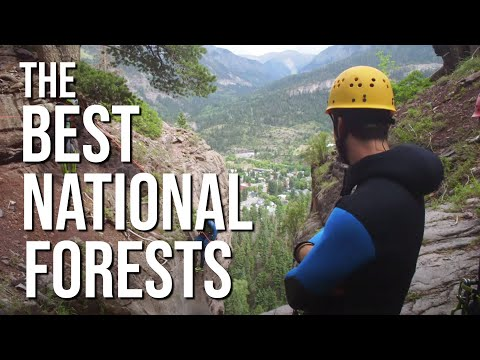 Best National Forests In The U.S. | Montana Bear Encounters To Colorado 14ers