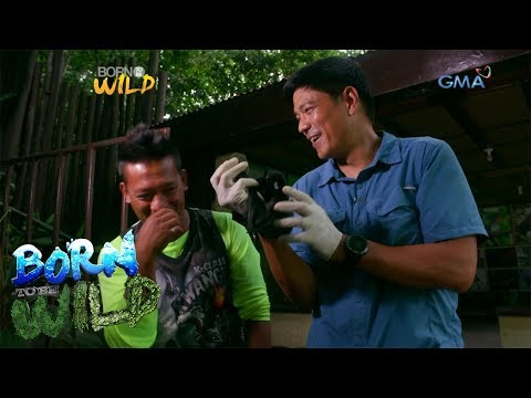 """Born to Be Wild: Meet the """"parents"""" of these baby flying foxes!"""