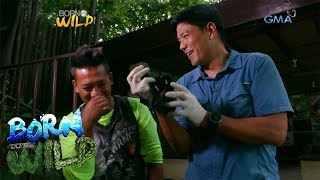 "Born to Be Wild: Meet the ""parents"" of these baby flying foxes!"