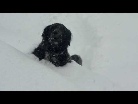 Snow Dog Fail.