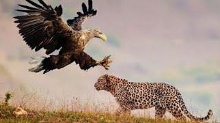 As 5 Maiores Lutas e Batalhas Entre Animais Selvagens