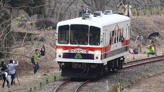 岐阜県飛騨市神岡町で4月8日、旧神岡鉄道のディーゼル車「おくひだ1...
