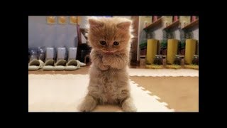 Cute Baby animals Videos Compilation - Funny moment of the animals