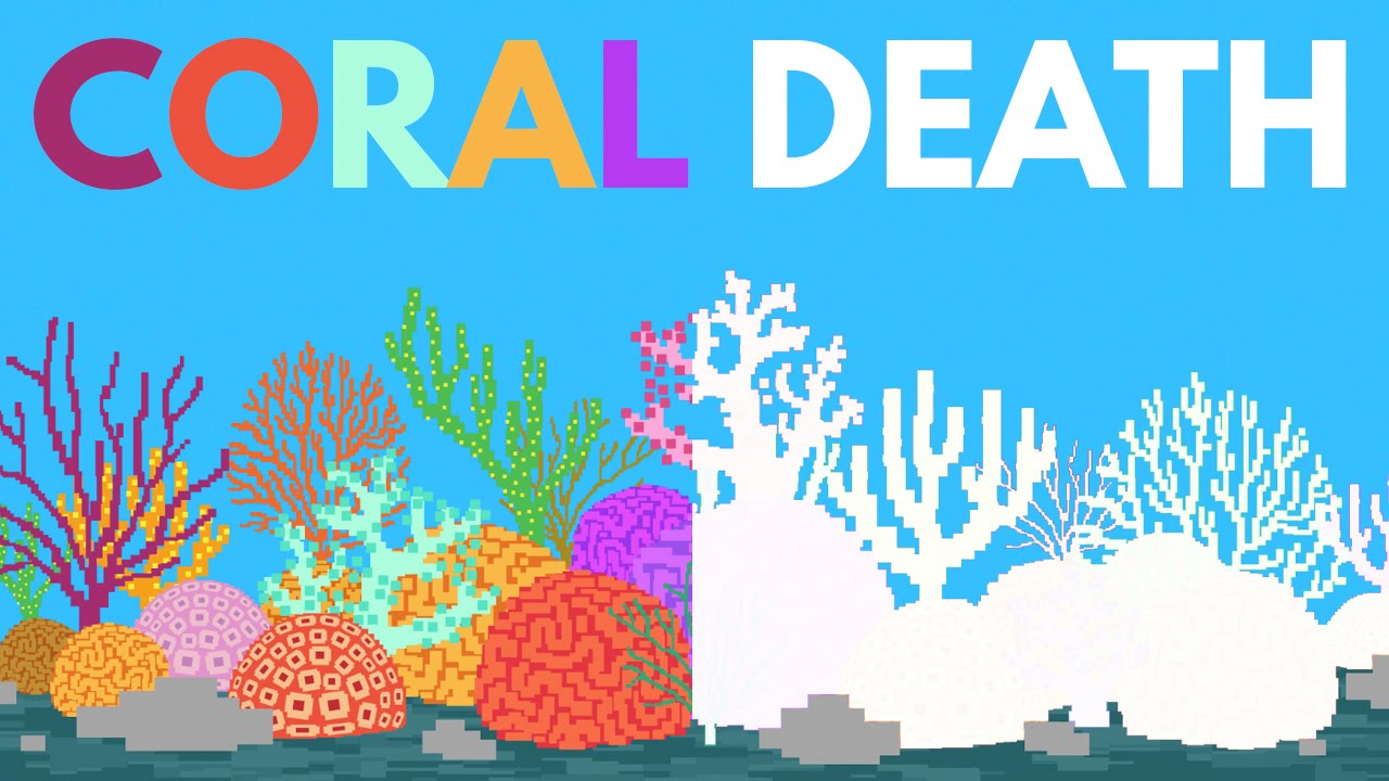 what-happens-if-all-the-coral-dies