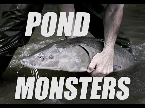 Download Youtube: HE CAUGHT WHAT? Look at the size of these pond monsters!!