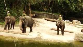 ШОУ Слонов Смешное видео
