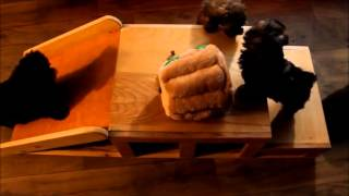Comical Zuchon Puppies Sliding Down Their Slide Www.tinyteddys.com