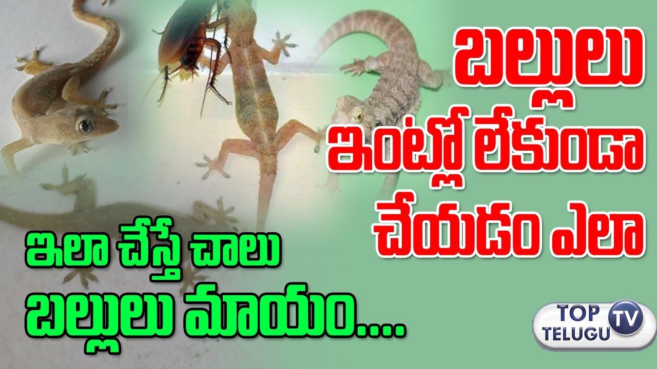 బల్లులు ఇంట్లో లేకుండా చేయడం ఎలా | How to Get Rid of Lizards at House |  Home Remedies |Top Telugu TV