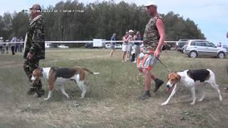 XI Всероссийская выставка охотничьих собак г ТУЛА
