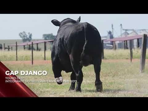 Touro GAP Django - Brangus indicado para IATF - RENASCER BIOTECNOLOGIA VIDEO