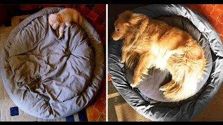 Extremely Cute Before & After Photos Of Dogs Growing Up