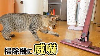 子猫の猫パンチで掃除機は壊れる!?