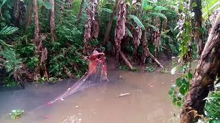Hành trình đi vào rừng U Minh Hạ Cà Mau giăng lưới và kết quả không thể ngờ - sub chéo