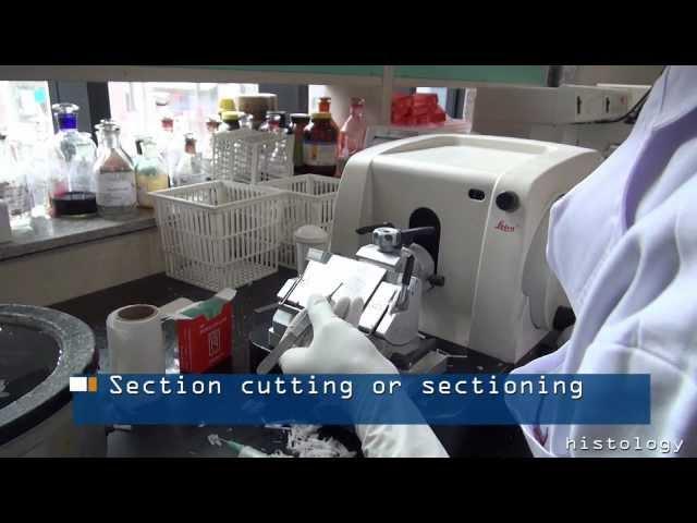 FFPE - Tissue Processing/Embedding/Sectioning for Histology, Immunohistochemistry (IHC), ISH & FISH