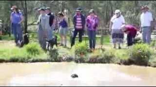 Murray River Curly Coated Retriever Association