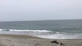 Касатки в Охотском море
