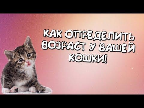 Как понять сколько котенку месяцев