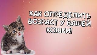 Как определить возраст у котенка