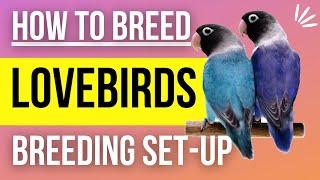 Lovebird Breeding Cage Setup