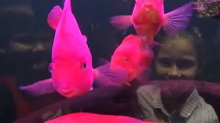 Китайский рынок аквариумных рыбок. Рыба, раки, лягушки, тритоны, звёзды, кораллы