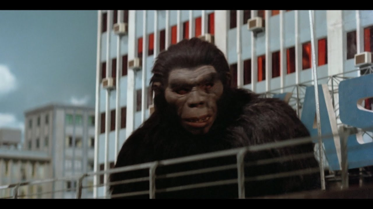 Download Shaw Brothers' The Mighty Peking Man 猩猩王 (1977) - Act 07 - Orangutan King Save The Beauty