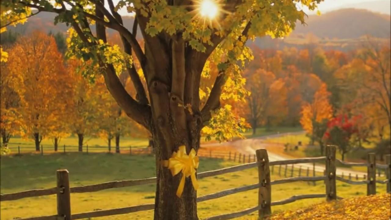 Dawn - Tie A Yellow Ribbon Lyrics | MetroLyrics