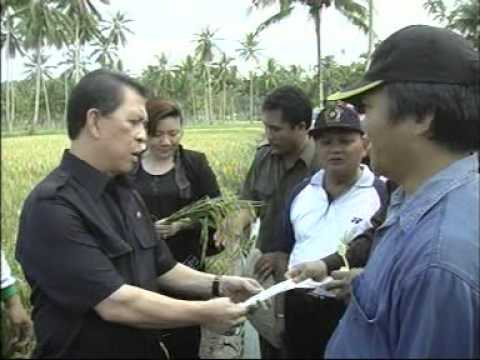 James D.D. Massie's Activities in Developing the Organic Rice Field