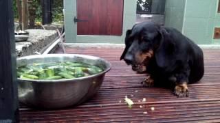 летняя диета у собаки 1