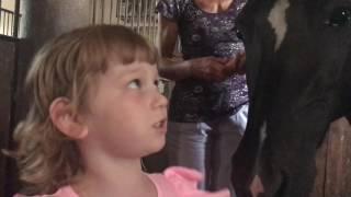 Конюшня в Чехии.Семейный выезд на конюшню впервые в жизни. Кони, Собаки, положительные  эмоции