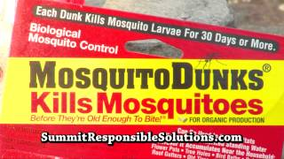 Mosquito Dunk Review