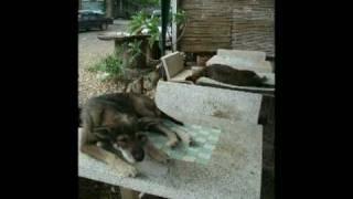 2008年11月タイで出会った犬と猫の写真です。
