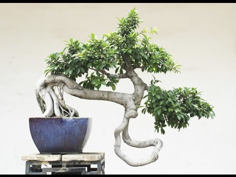 The Twisted Bonsai Style Youtube