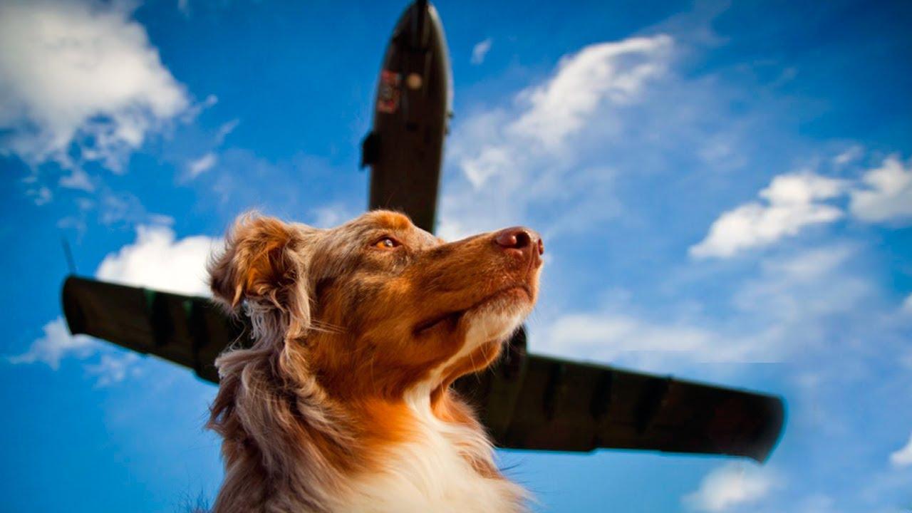 Мужчина оставил собаку в аэропорту, через пол года он узнал, что его пес встречает каждый самолет