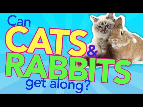 Can Cats And Rabbits Get Along?