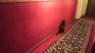 Studio :: Dynamite cat at Electrical Audio Studios