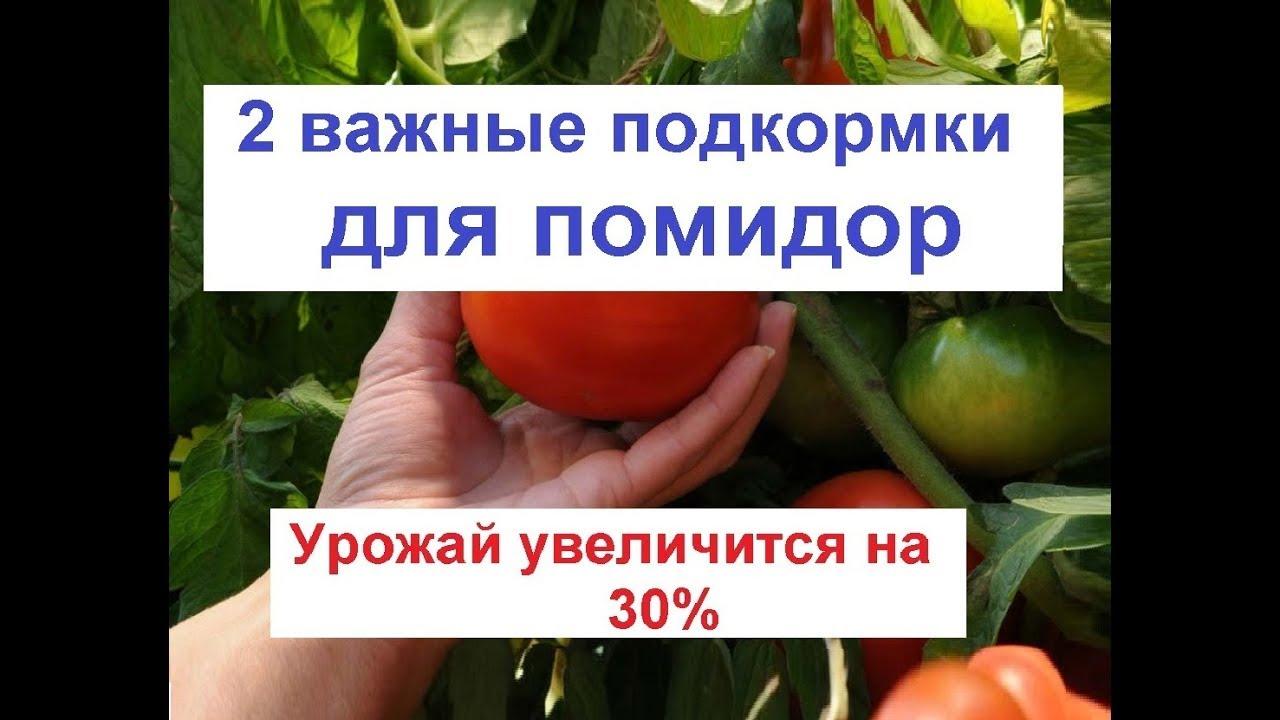 Как увеличить урожай помидор// подкормка помидор// лечение томата