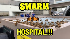 Honey Bees at the Hospital!!! Fun SWARM REMOVAL at SOUTHEAST HEALTH -  My Workplace