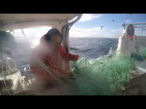 Gillnetting Offshore Jan 2017
