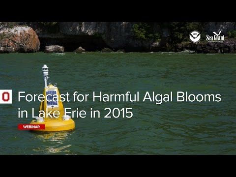 NOAA Lake Erie Harmful Algal Bloom Forecast 2015