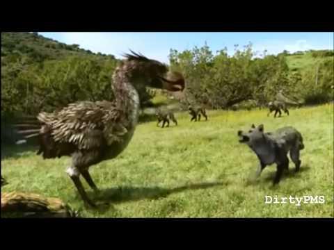 Terror Bird - Denied
