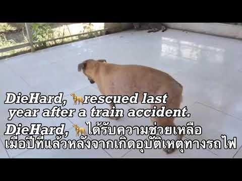 ช่ายเหลือน้องหมาประสบอุบัติเหตุจากรถไฟ