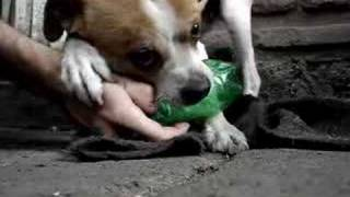 milo and the bottle