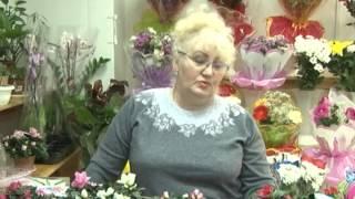 Азалия – воспоминание о весне(Продавец-консультант Вера Фалеева даёт советы, как вырастить в домашних условиях цветущую азалию. За окном..., 2014-12-03T09:14:24.000Z)